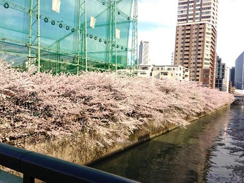 Sakura1303_1